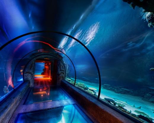 какую воду наливать в аквариум