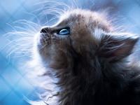 сколько должен есть котенок
