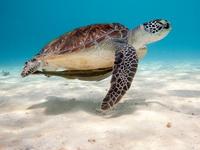 Средняя продолжительность жизни черепах
