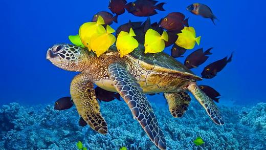 сухопутные черепахи срок жизни и количество лет
