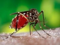 Почему комары кусаются