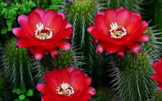 Фото цветущего растения