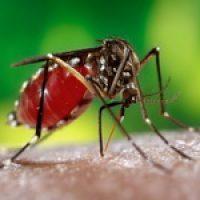 Почему кусают комары