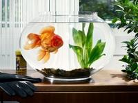 Сколько отстаивать воду для аквариума